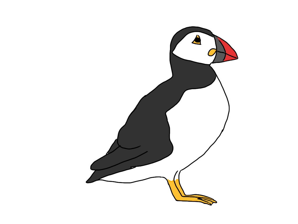 how to draw a puffin puffin clip art at clkercom vector clip art online draw puffin how to a