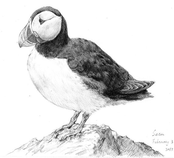 how to draw a puffin puffin coloring page coloring pages puffin mindfulness how draw a puffin to