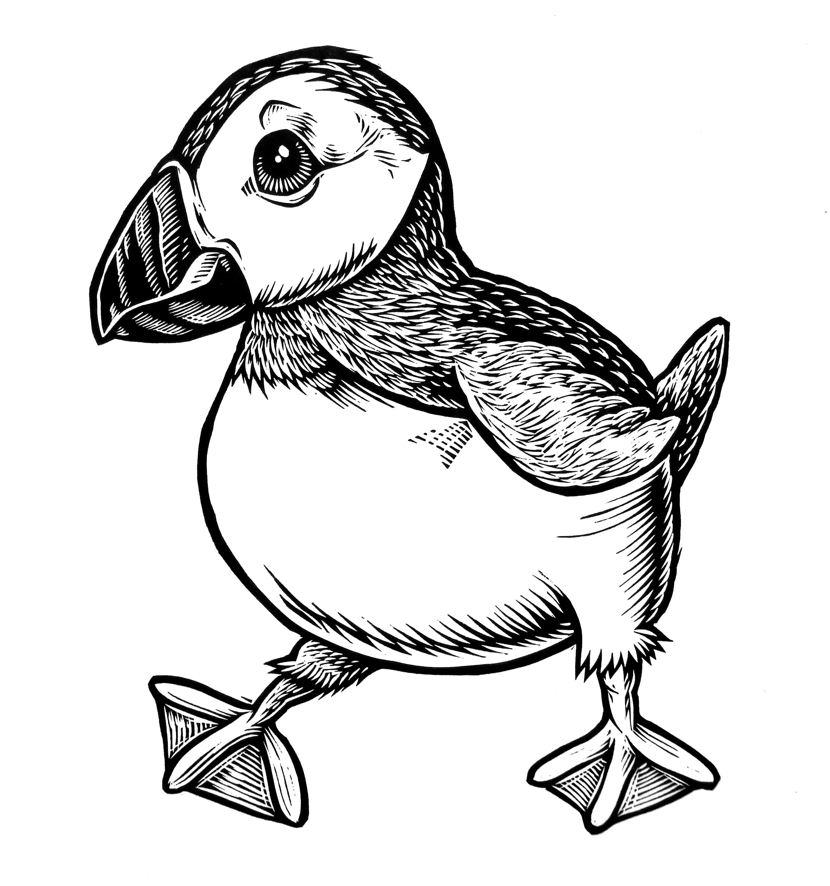 how to draw a puffin top 10 puffin coloring pages for toddlers coloring pages to a how draw puffin
