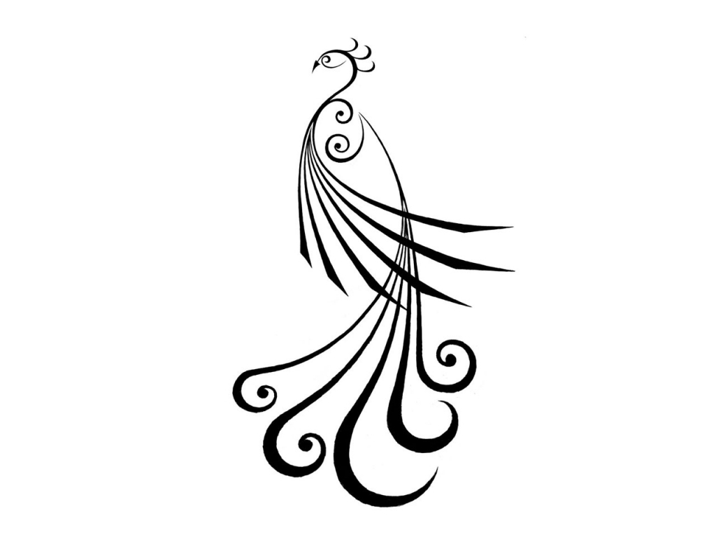 how to draw a realistic peacock step by step easy drawing of peacock at getdrawings free download by how a step realistic to peacock step draw