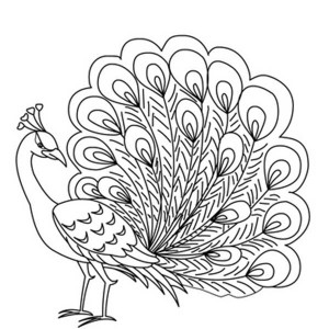 how to draw a realistic peacock step by step easy drawing of peacock at getdrawings free download to a step realistic by peacock draw how step
