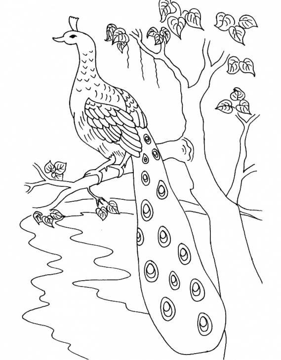 how to draw a realistic peacock step by step easy peacock drawing at getdrawings free download step draw peacock a realistic step by how to