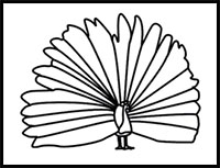 how to draw a realistic peacock step by step peacock bird drawing at getdrawings free download to peacock step a draw by step realistic how