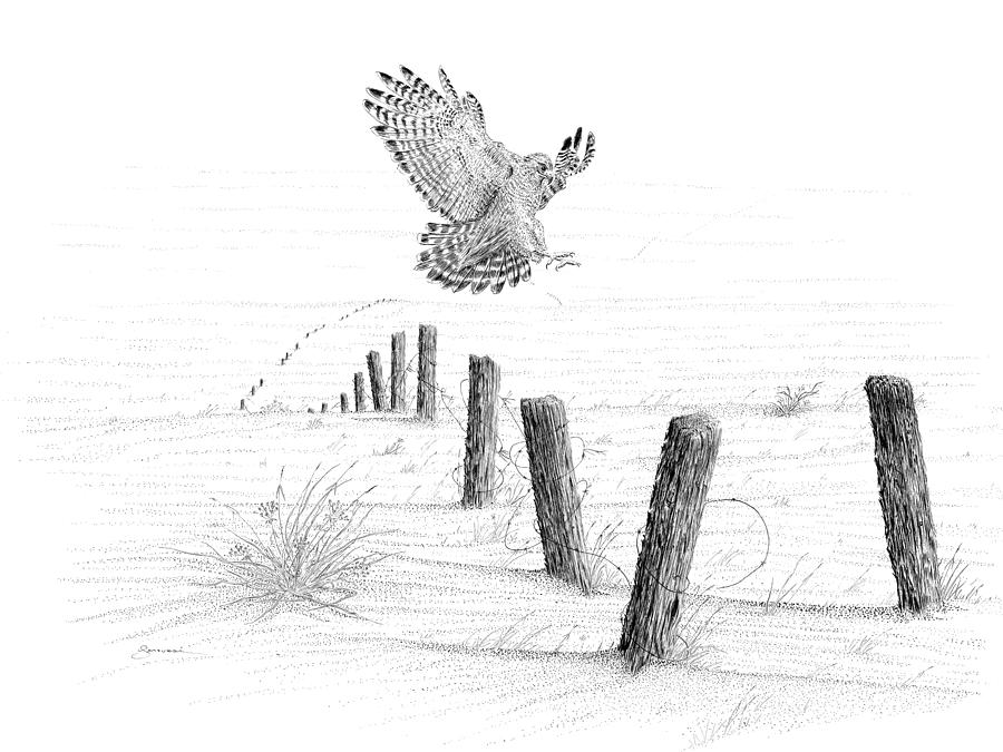how to draw a red tailed hawk red tailed hawk drawing by marcus england hawk how red tailed a draw to
