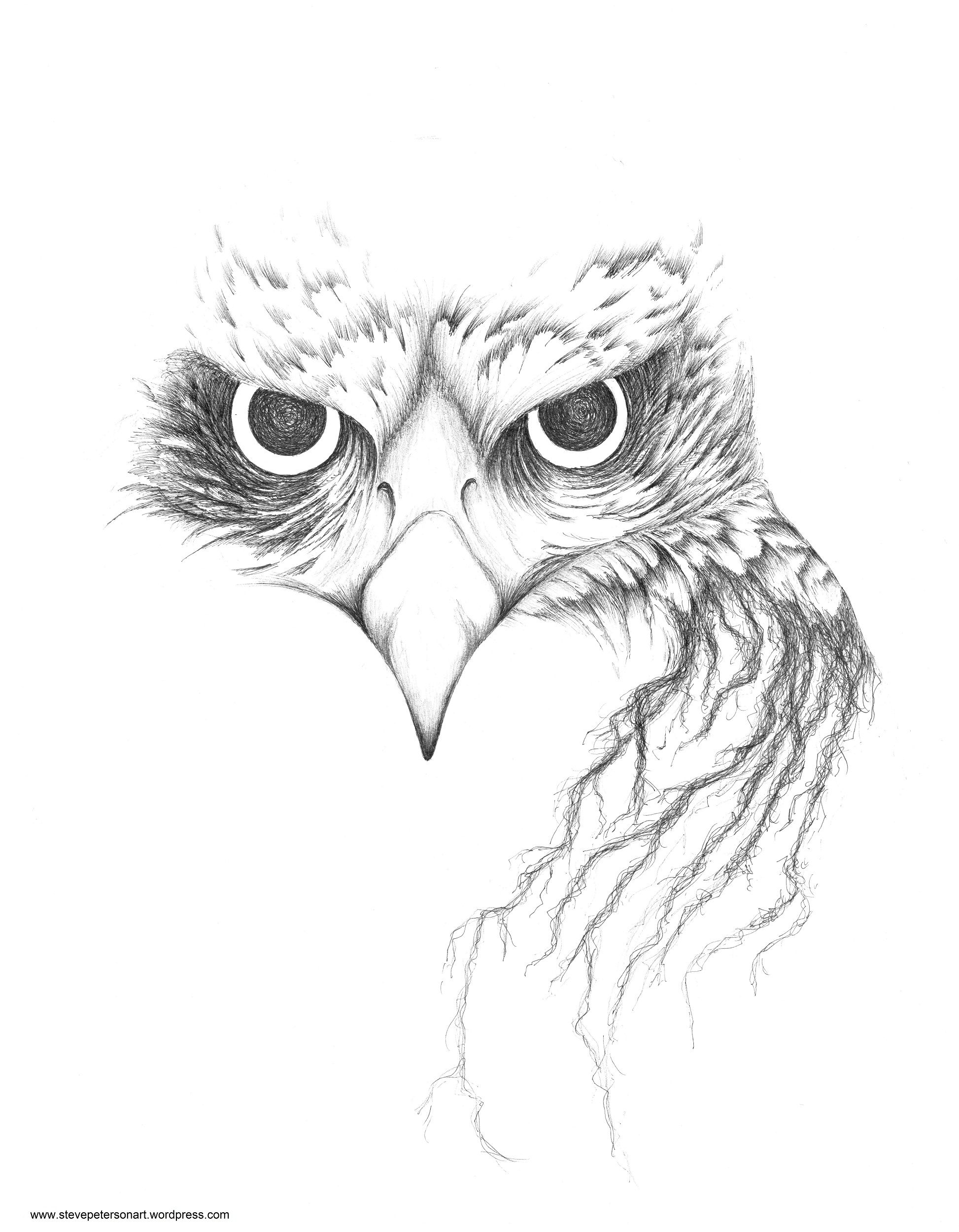how to draw a red tailed hawk stencil red tailed hawk red tattoo designs hawk draw how tailed a red to