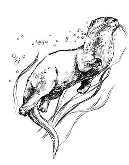 how to draw a river otter best ever how to draw a river otter hd wallpaper river to otter draw how a