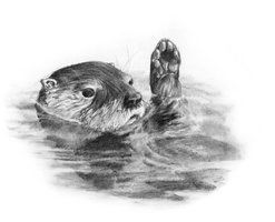 how to draw a river otter google image result for httpkristinandjerryname how river a to otter draw