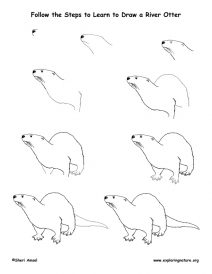 how to draw a river otter how to draw an otter otter drawing otters drawings how draw otter to river a