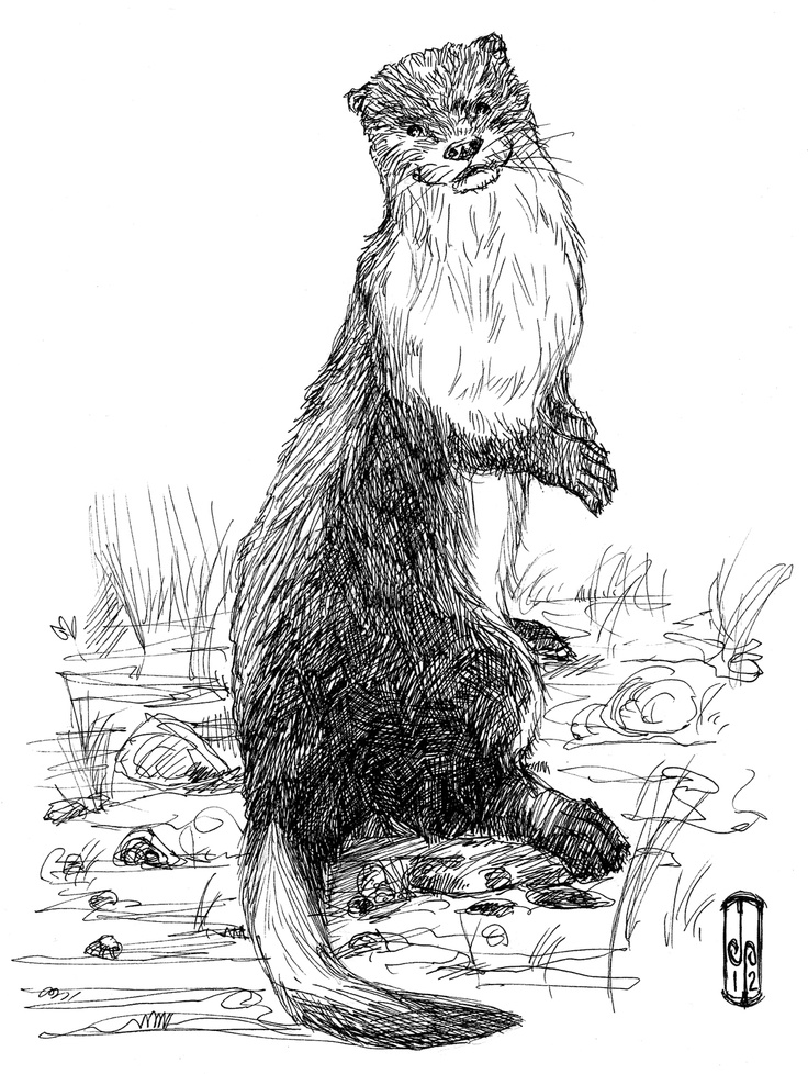 how to draw a river otter otters by baron engel so cute and there are other river a otter how to draw