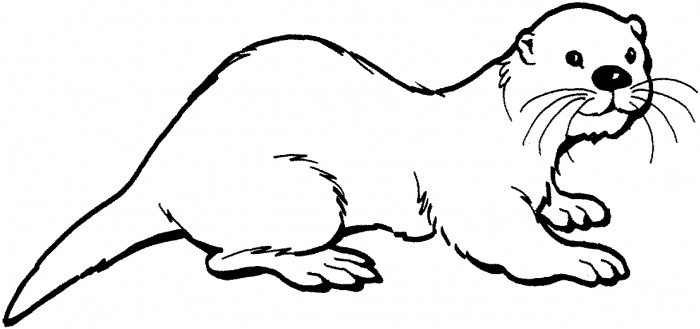 how to draw a river otter river otter tattoos google search otter tattoo a how draw river otter to