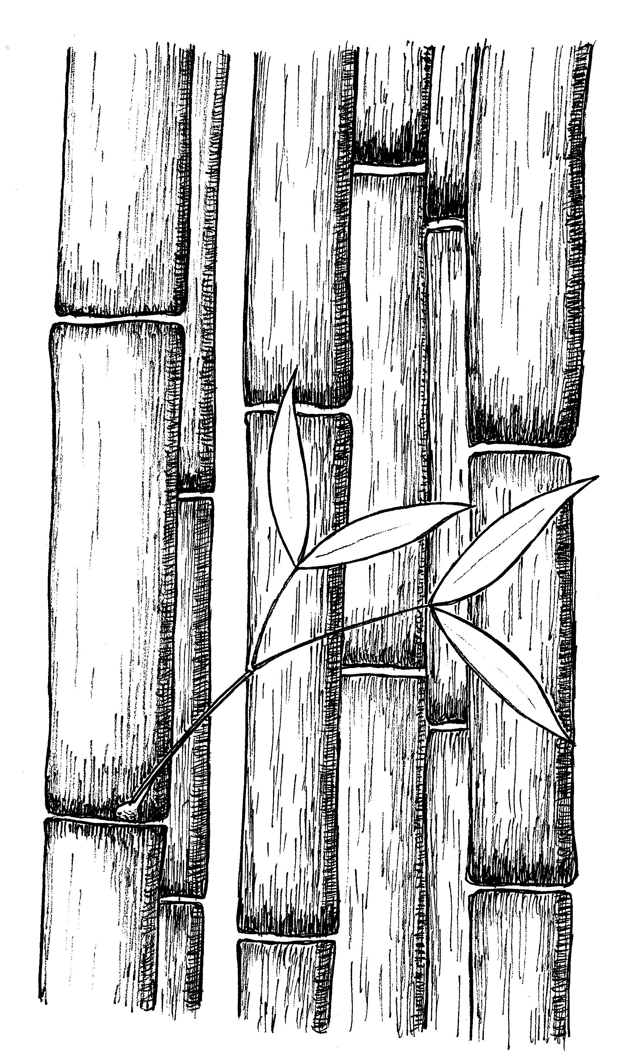 how to draw bamboo leaves bamboo by rob stevenson architecture drawing tree line how draw bamboo leaves to