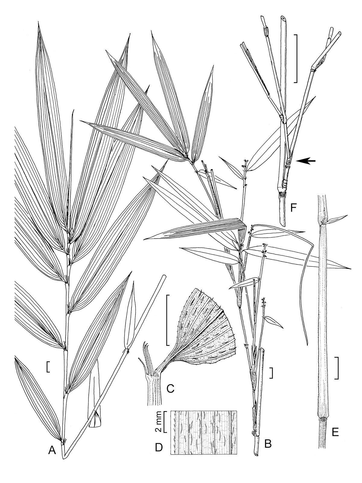 how to draw bamboo leaves bamboo grove photo bamboo drawings how to bamboo draw leaves