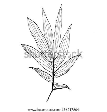 how to draw bamboo leaves bamboo leaves drawing stock vector 136217204 shutterstock to draw bamboo how leaves