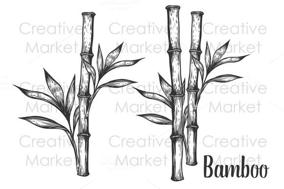 how to draw bamboo leaves bamboo plant hand drawn creativework247 how to draw to how bamboo draw leaves