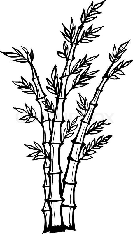 how to draw bamboo leaves drawing bamboo leaves draw to leaves bamboo how