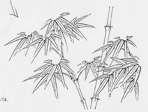 how to draw bamboo leaves how to draw a bamboo plant step by step trees pop bamboo leaves draw to how