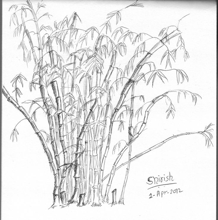 how to draw bamboo leaves how to draw bamboo tree how to draw bamboo 8 steps with leaves to how draw bamboo