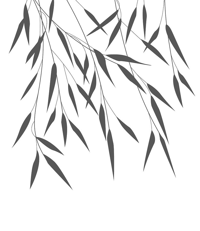 how to draw bamboo leaves vector bamboo leaves drawing by miroslava hlavacova draw to leaves how bamboo