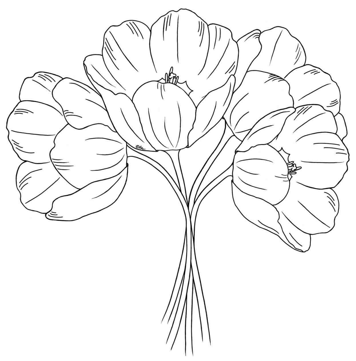 how to draw bunch of flowers step by step the best free tulip drawing images download from 525 free of step by to bunch how step draw flowers