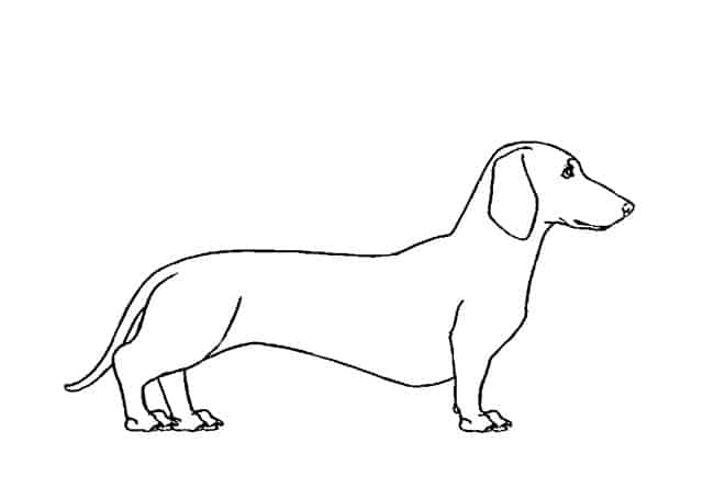 how to draw dachshund step by step dachshund clube with images dachshund drawing dog how draw dachshund step step to by