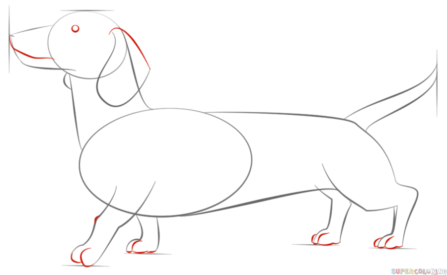 how to draw dachshund step by step excellent site showing correct dachshund conformation with step how dachshund by draw step to
