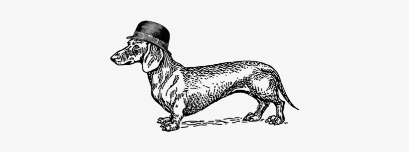 how to draw dachshund step by step how to draw a dachshund a step by step lesson step draw by step how dachshund to