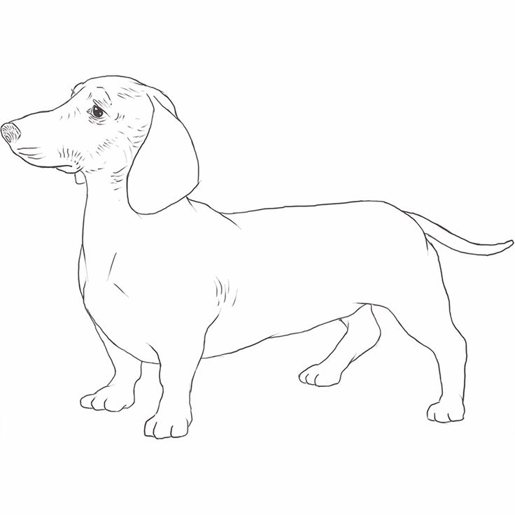how to draw dachshund step by step how to draw a dachshund dog step by step youtube step to dachshund draw step by how