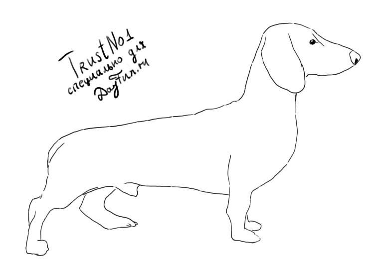 how to draw dachshund step by step how to draw a dachshund drawingnow how step to step draw dachshund by