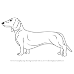 how to draw dachshund step by step how to draw a dachshund pictures video to dachshund by draw how step step