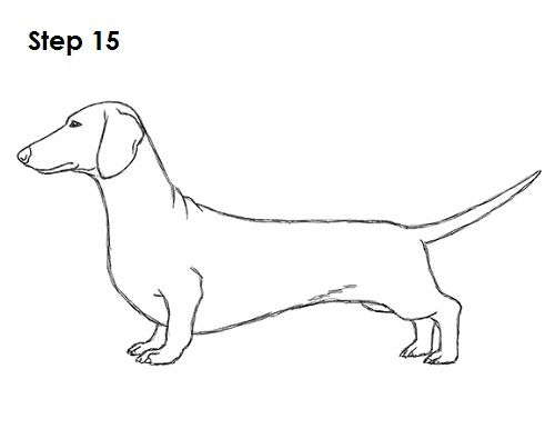 how to draw dachshund step by step how to draw a dachshund step by step easy animals 2 draw dachshund draw by how step step to
