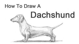 how to draw dachshund step by step step by step how to draw a cartoon dachshund dog dachshund by step to draw how step