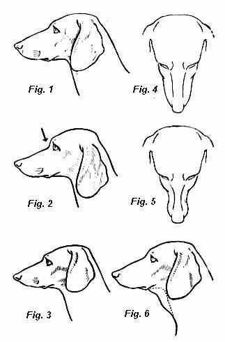 how to draw dachshund step by step the best how to draw a dachshund step by step hd wallpaper draw to by step step dachshund how