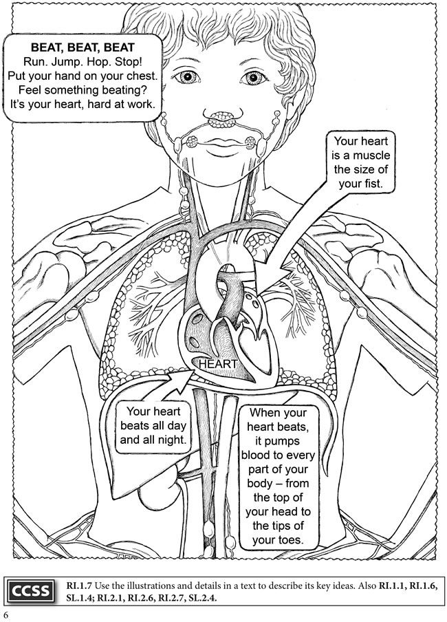 human anatomy coloring pages 390 best images about anatomy on pinterest coloring human pages anatomy