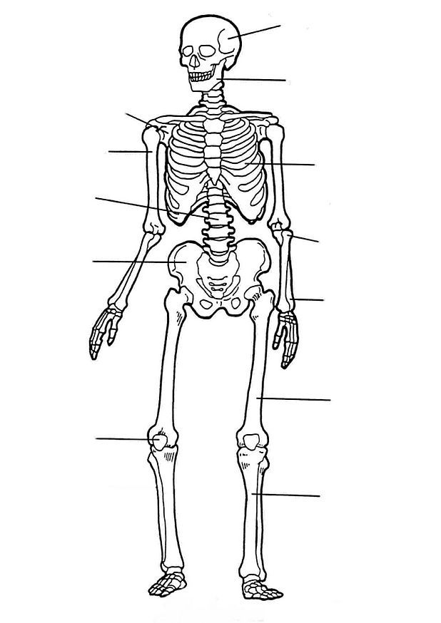 human anatomy coloring pages free printable human anatomy coloring pages free coloring human anatomy pages