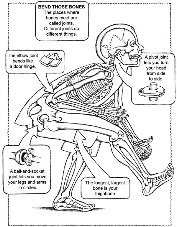 human anatomy coloring pages human anatomy coloring pages 11 best free printable anatomy coloring human pages