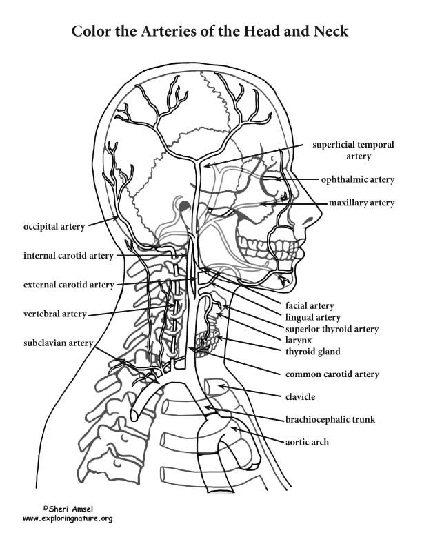 human anatomy coloring pages human anatomy coloring pages pertaining to invigorate to anatomy coloring human pages