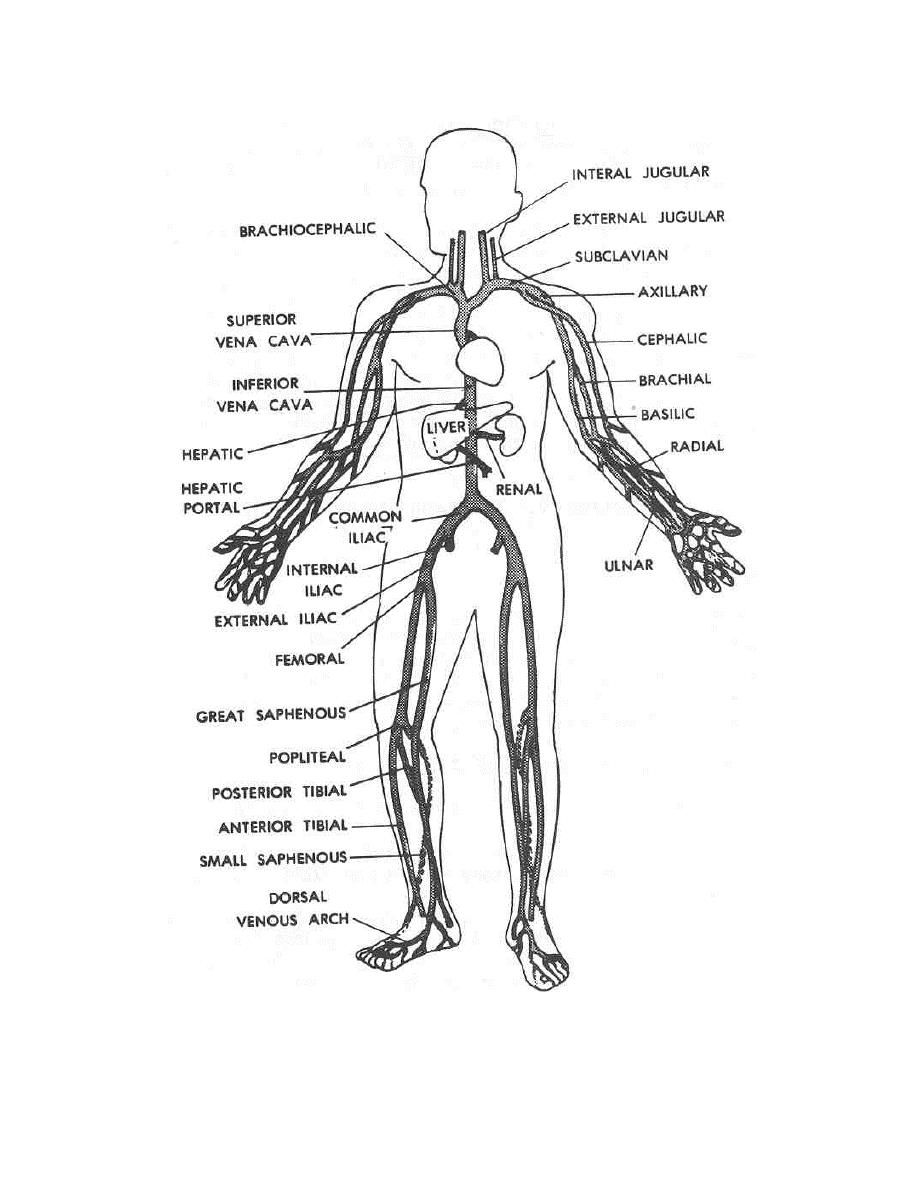 human anatomy coloring pages human body coloring pages free printable human body pages human anatomy coloring