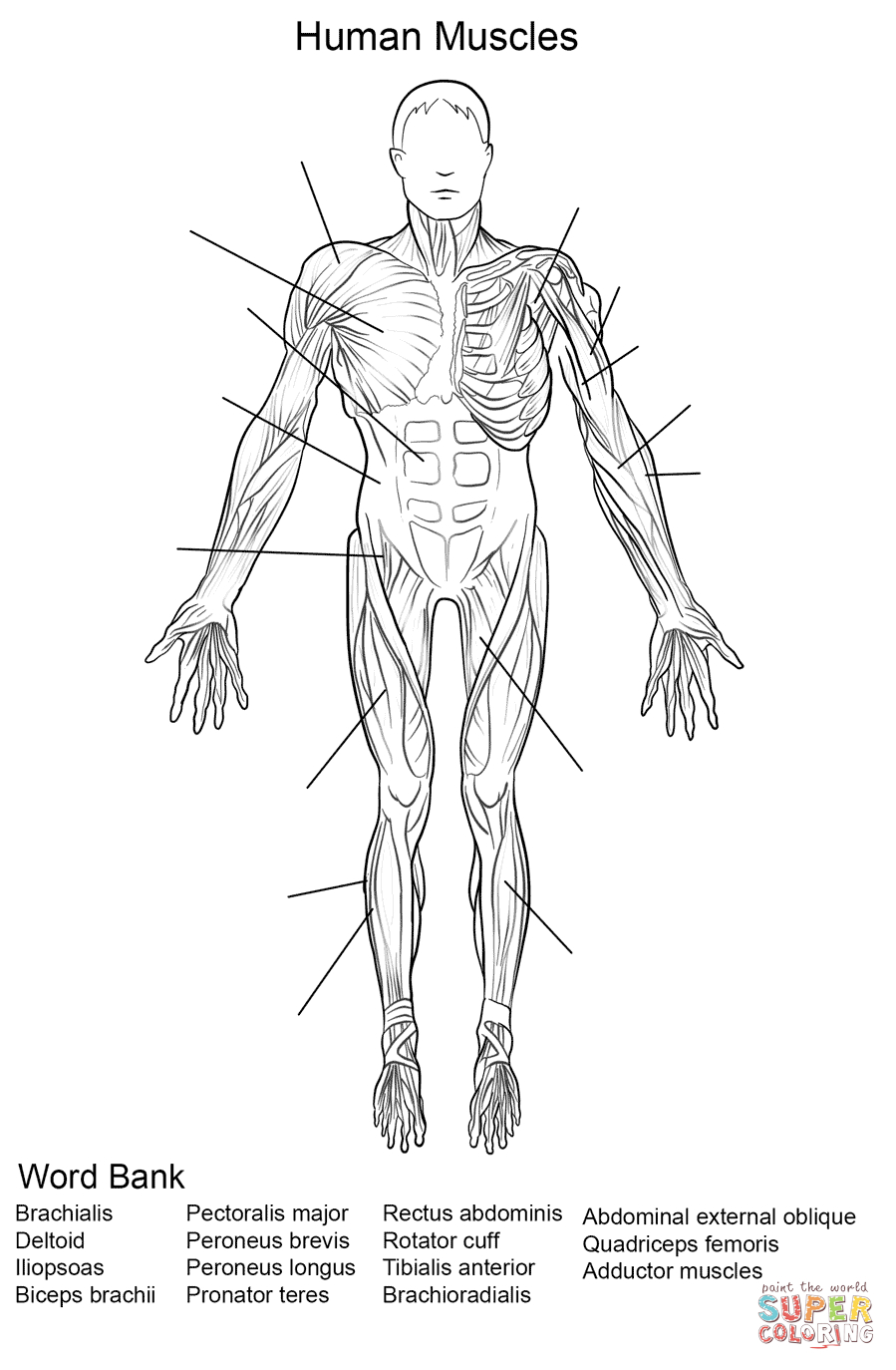 human anatomy coloring pages human body systems coloring pages coloring home human pages anatomy coloring