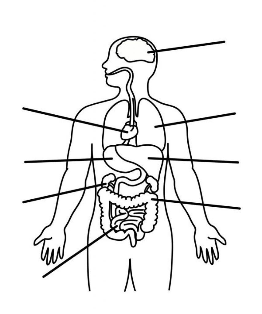 human anatomy coloring pages human body systems coloring pages coloring home pages human anatomy coloring