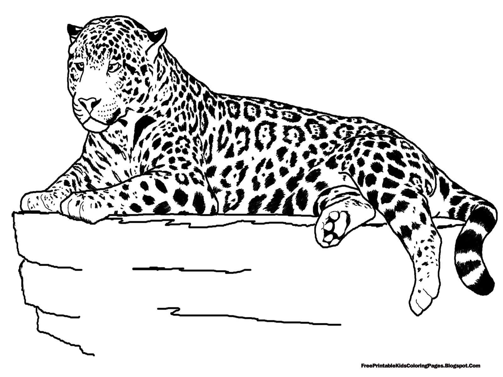jaguar pictures to print animal coloring pages free coloring pages printable for pictures jaguar print to
