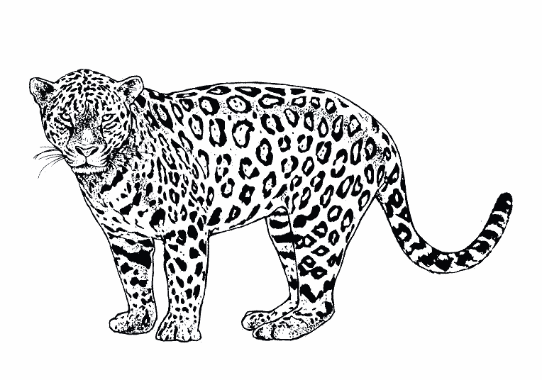 jaguar pictures to print jaguar coloring pages to download and print for free to print pictures jaguar