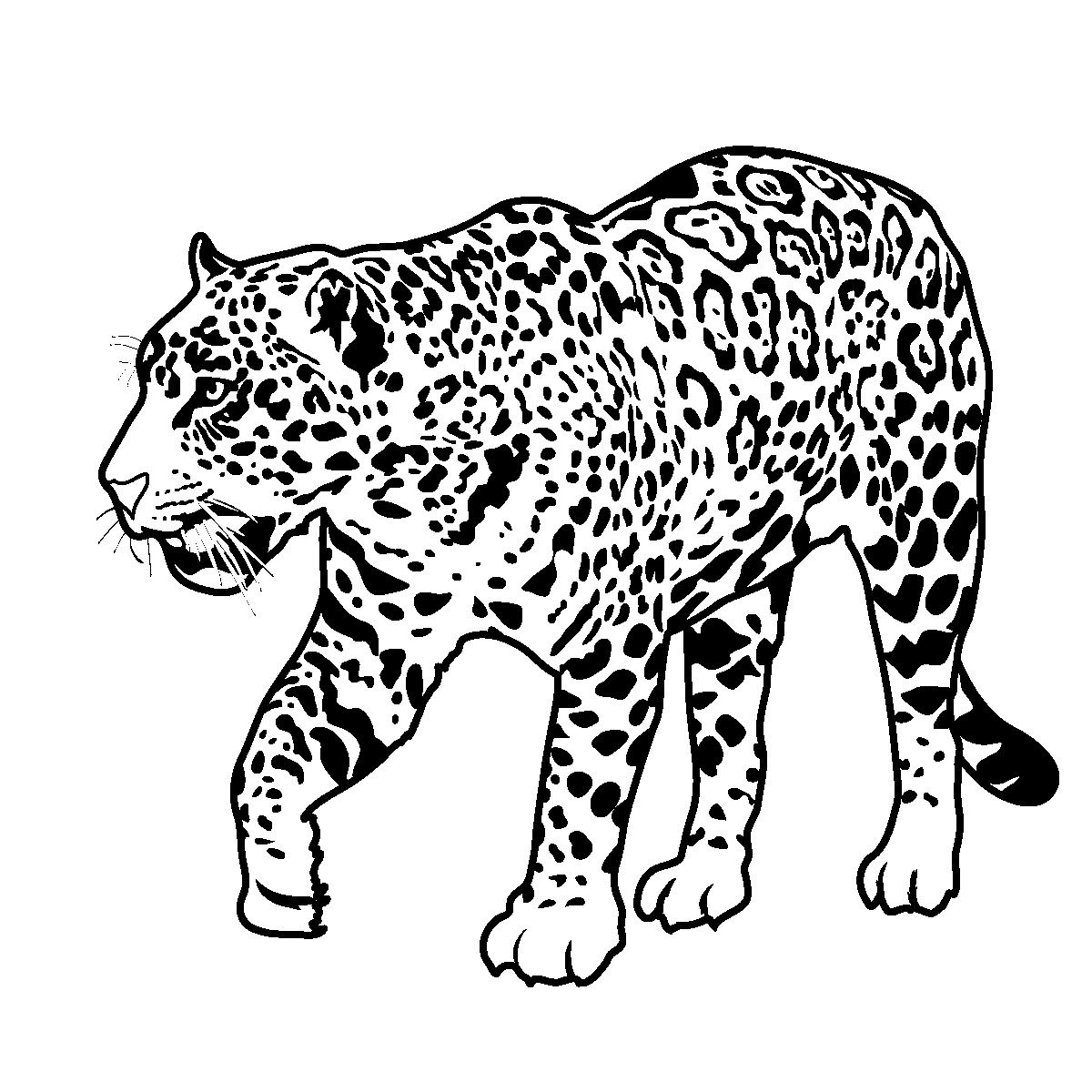 jaguar pictures to print jaguar laying coloring pages free printable kids print pictures jaguar to