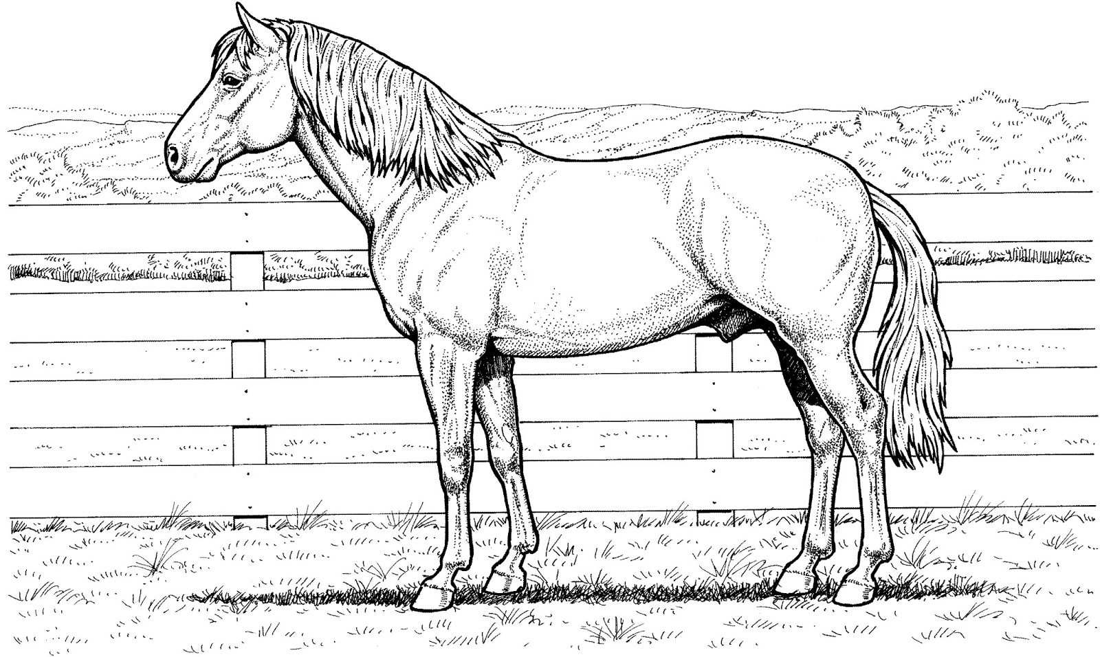 kids horse coloring pages realistic coloring pages of horses realistic coloring pages coloring pages horse kids