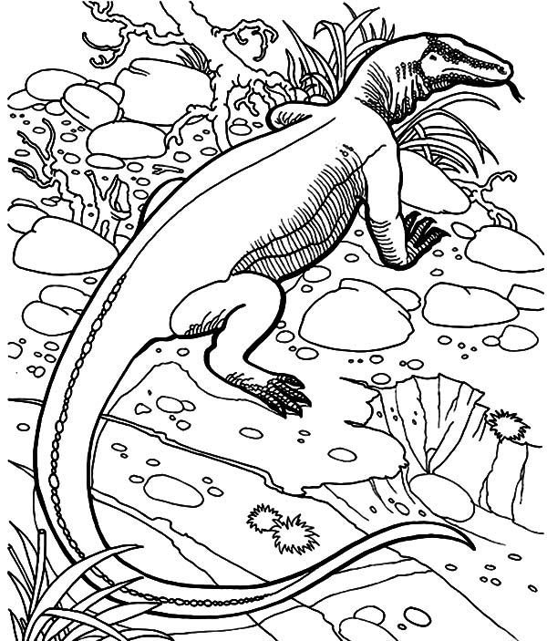 komodo dragon coloring page learning page free pages clip art gallery komodo dragon komodo page coloring