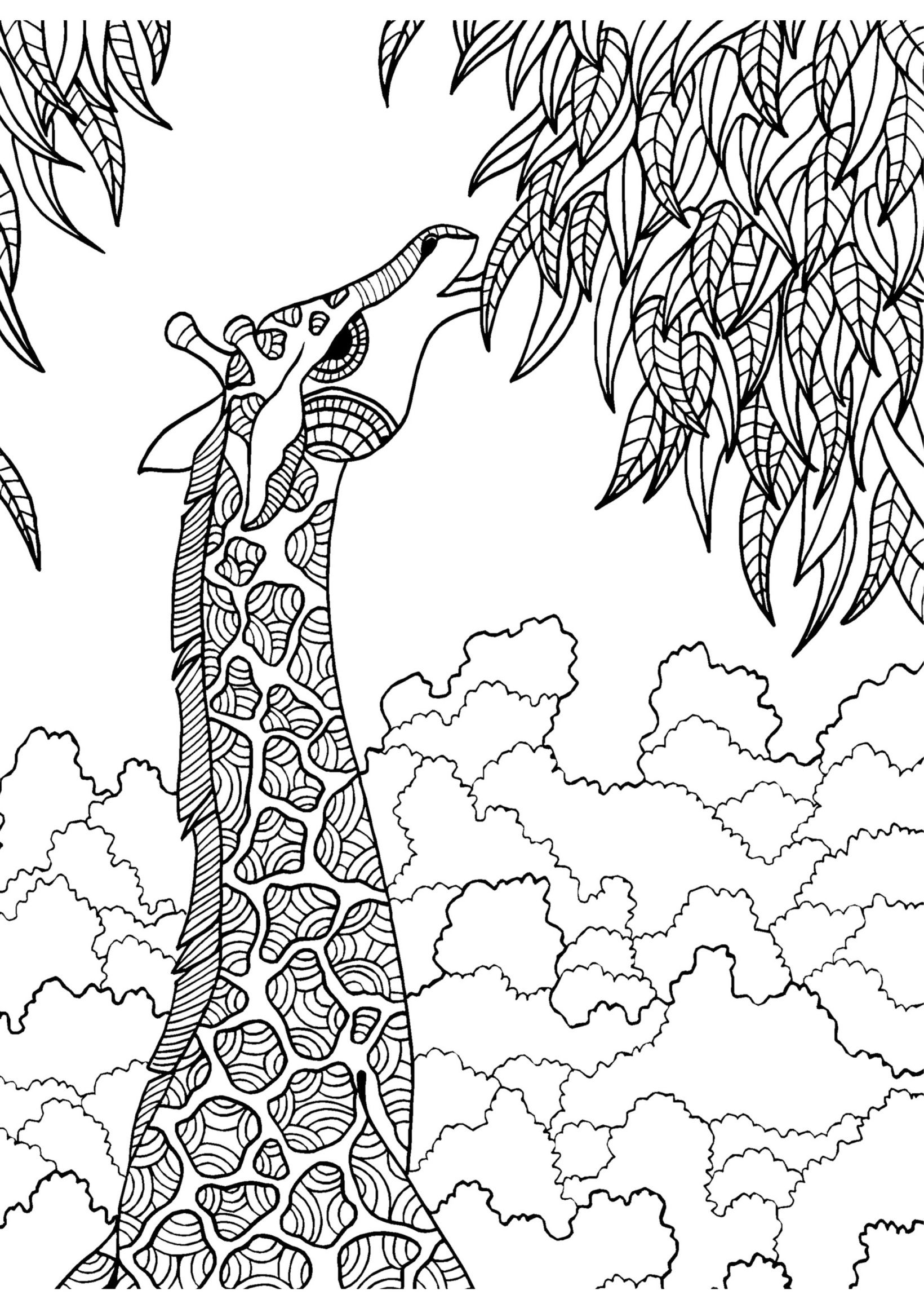 large animal coloring pages get this free printable elephant coloring pages for adults animal pages large coloring
