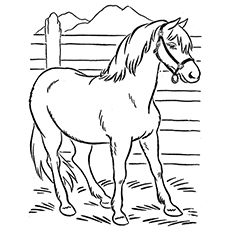 large animal coloring pages zebra coloring pages free printable kids coloring pages animal large pages coloring