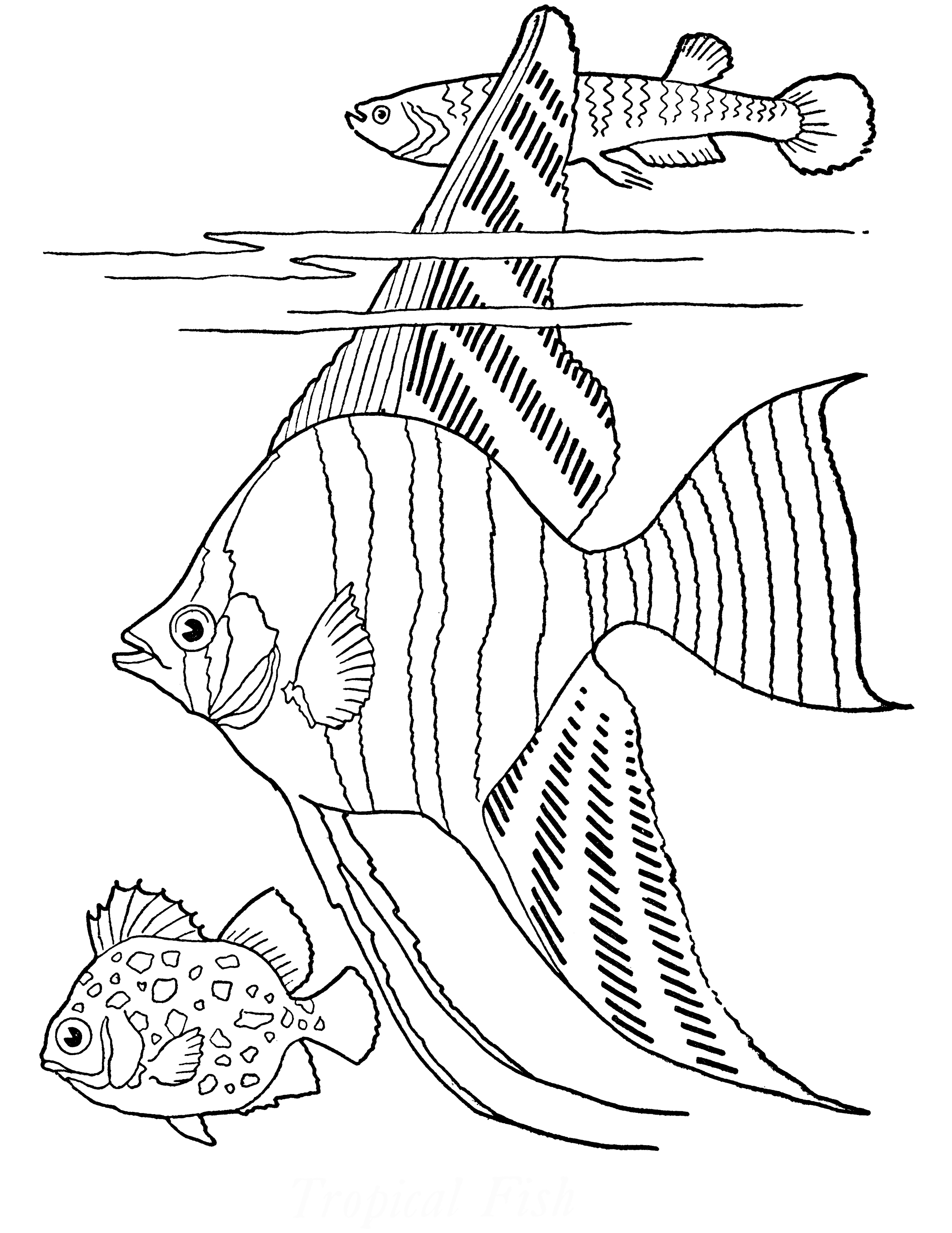 large fish coloring page angelfish coloring fish drawings fish coloring page fish coloring large page