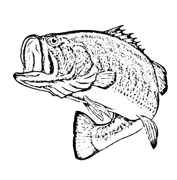 large fish coloring page large mouth bass drawing at getdrawings free download fish large page coloring