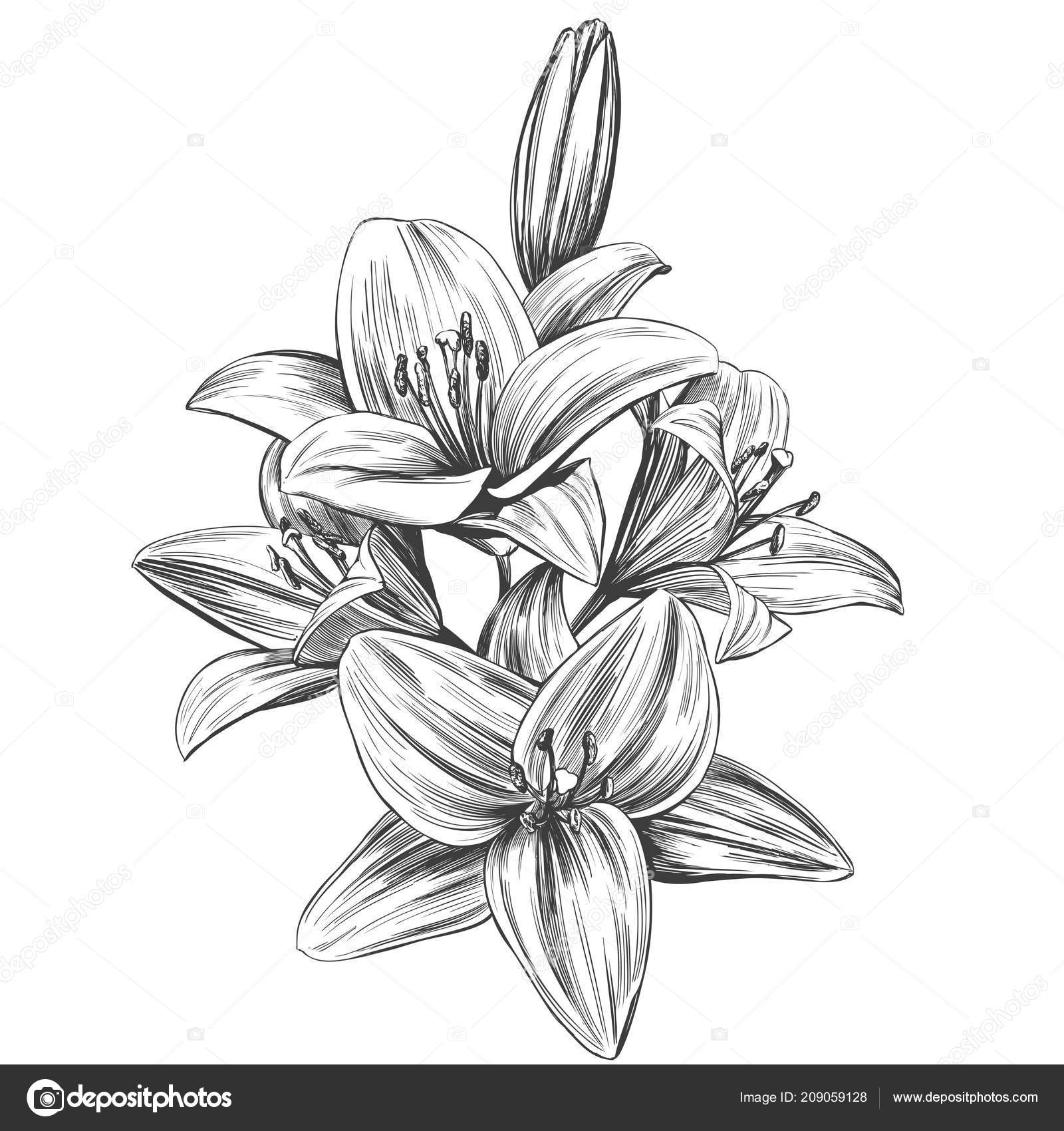 lily flower drawing lilly flower drawing at getdrawings free download drawing flower lily