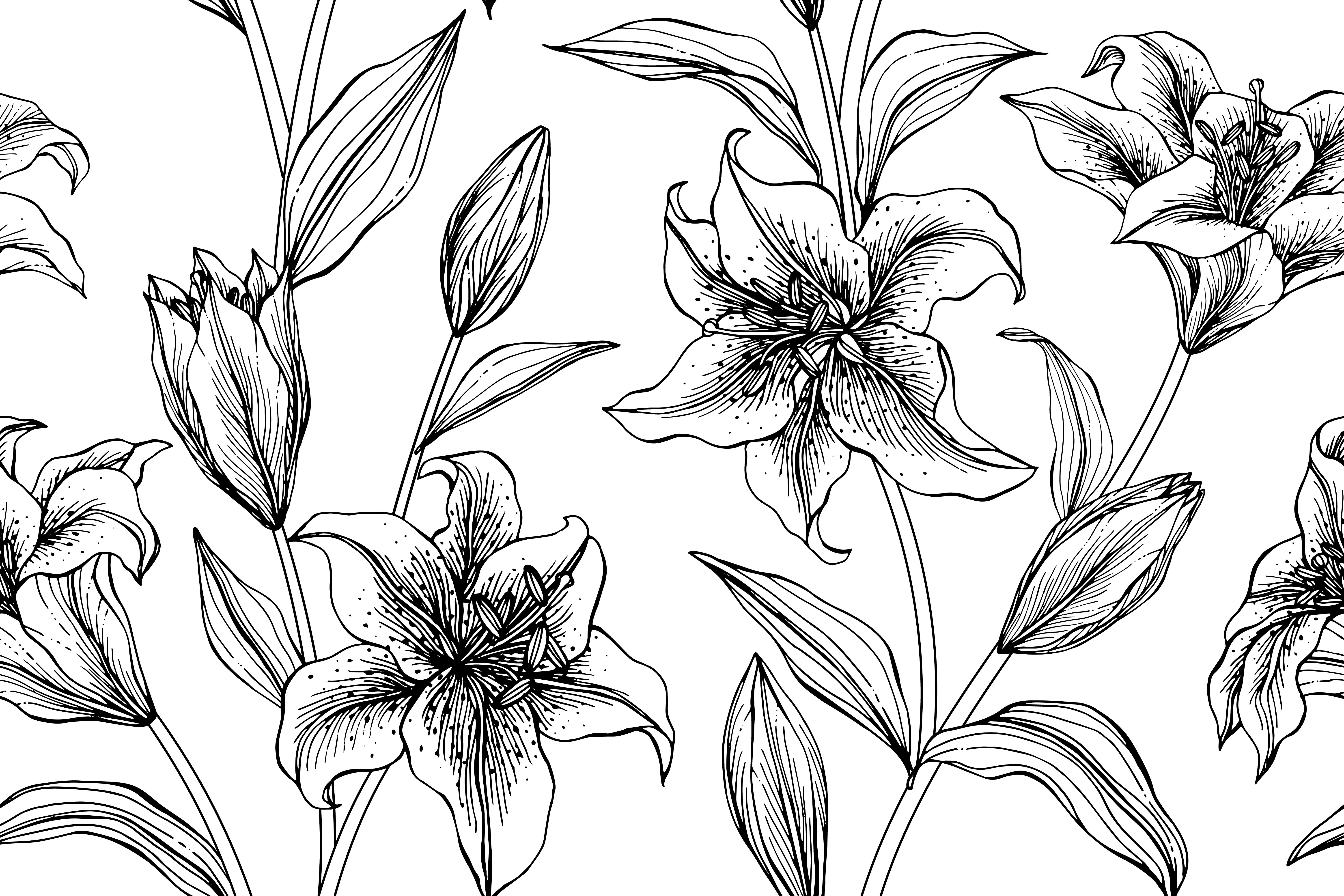 lily flower drawing lily drawing outline at getdrawings free download flower drawing lily